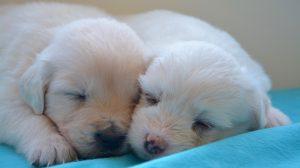 pets dog name